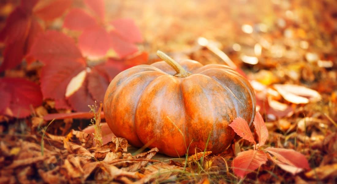 Słodka jesień z Zieloną Oberżą