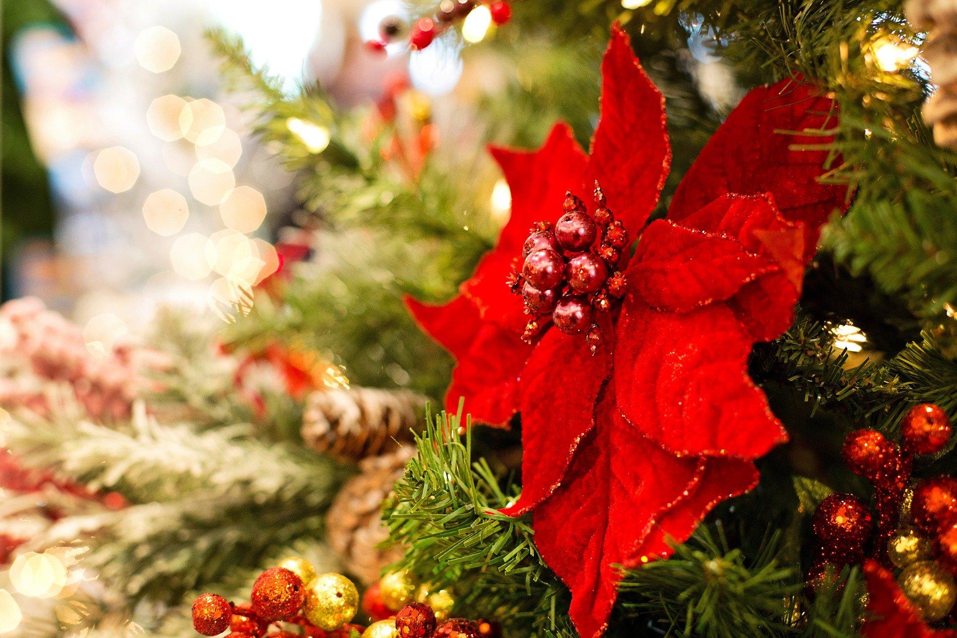 Oferta Świąteczna i Wigilijna